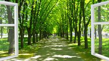 Fenêtre ouverte au beau parc avec beaucoup d'arbres verts