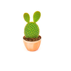 Opuntia cactus in brown pot isolated on white background