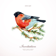 watercolor painting bullfinch on branch pine. vector illustratio