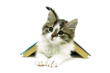 fluffy kitten lies under the open book. white background.
