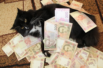 cat lying on the carpet with Ukrainian money