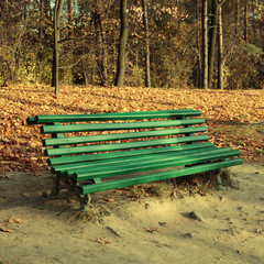 Green empty bench in the autumn park