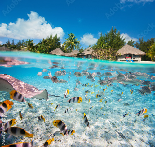 Papiers peints Plage Tropical island under and above water