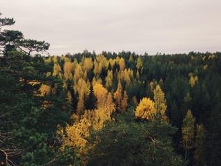 осенний  лес в Реповеси.  Финляндиия