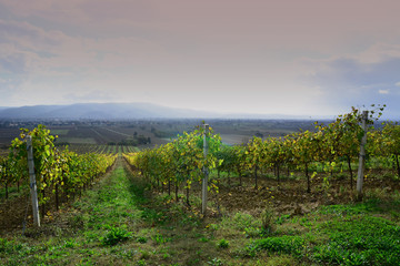 vigneti terre di vini