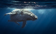 Humpback whales - Reunion island 2014. - 73252426