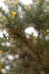 toiles d'araignées