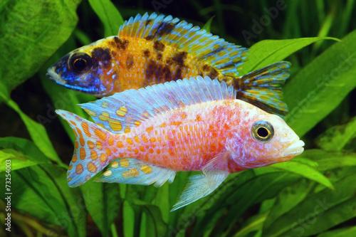 Leinwanddruck bilder 39 aquarium 39 seite 10 wandbilder for Teichfische versand