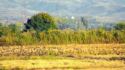 Beautiful bird flight on a field