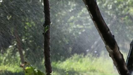 Watering in dry summer