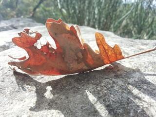Foglia d'autunno