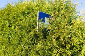 Schild Blaues Kreuz im Gebüsch