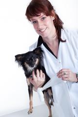 Kleiner Hund beim Tierarzt bekommt Wundverband
