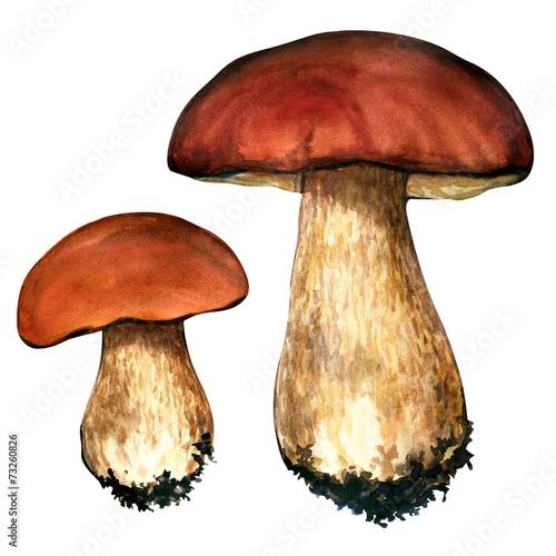 Leinwandbild Motiv porcini mushrooms. Cep on white background