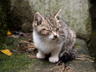 Tiny sick stray kitten. Hides, virtually blind, in dark corner.