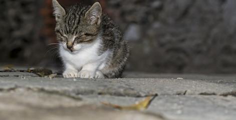 Animal welfare - suffering kitten, stray. Hiding in alley.