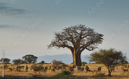Foto op Canvas Baobab African landscape with animals