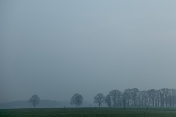 Morning fog in field with trees