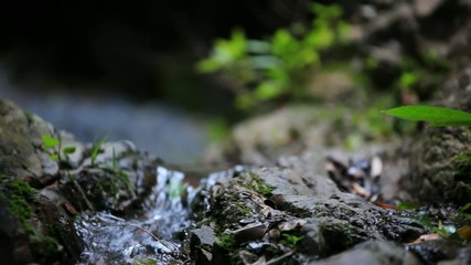 Close up view of stream waterfall and plants. Video shift motion