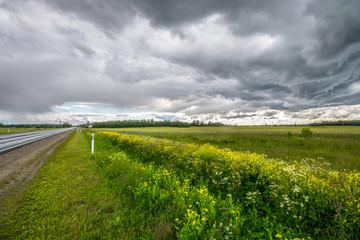Summer field, massive clouds