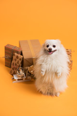 Dog with Christmas gift boxes