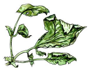 Diseased leaf of a plant. Botany