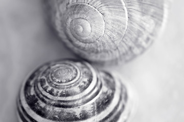 Snail house , shallow depth of field photo