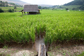 Irrigation water into rice field and Hut
