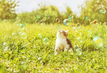 Cute kitten looks on soap bubbles