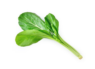 Small Chinese cabbage isolated