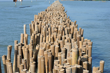 Bamboo barrier to protect the coast