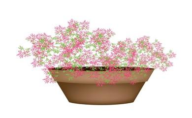 Beautiful Pink Flowering Plants in Flower Pot