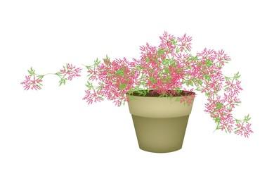 A Pink Flowering Plants in Flower Pot