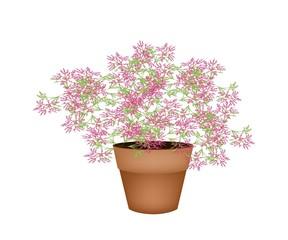 A Lovely Pink Flowering Plants in Flower Pot
