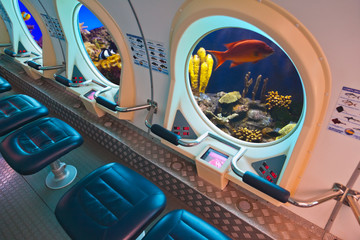 Fishes in submarine window