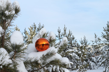 Sphere on a pine branch