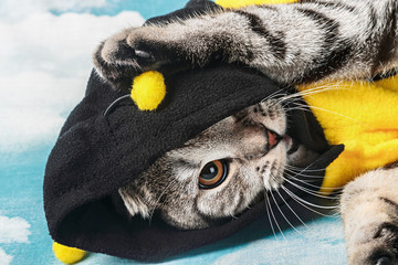 young cat in costume bee