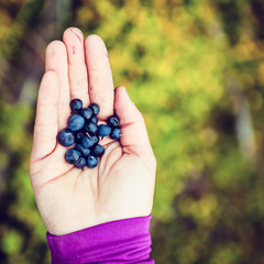 Woman hand giving blueberry vintage background