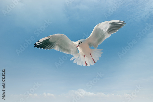 Fotobehang seagull and blue sky