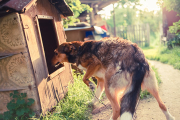 dog and his house