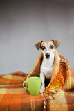 Dog get warm by cup of tea