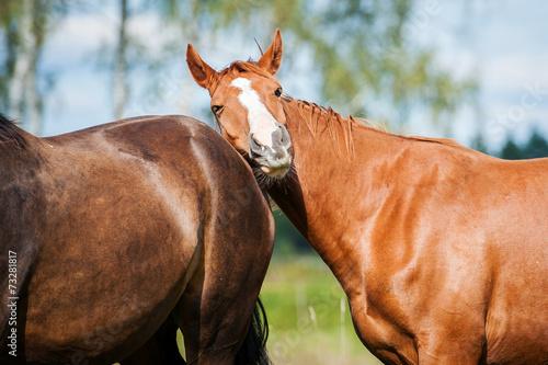 Papiers peints Equestre Portrait of a horse on the pasture