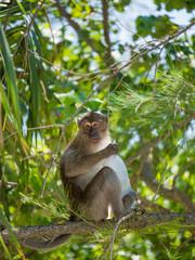 Monkey on the beach in Thailand