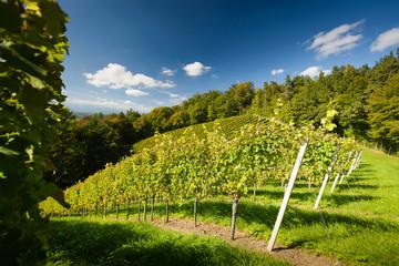 Styrian Tuscany Vineyard Austria