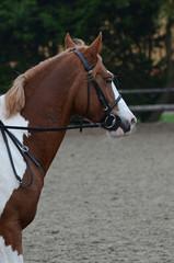 cheval pie