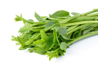 Malabar spinach or Ceylon spinach isolated on white