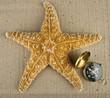 starfish and compass