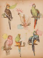 vintage parrot scrap book stickers