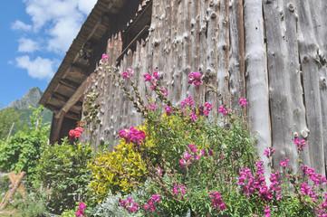 massif de fleur devant une grange