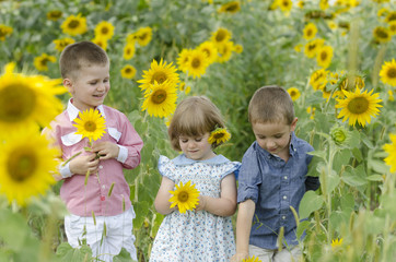 Kids playing in a sunflower field